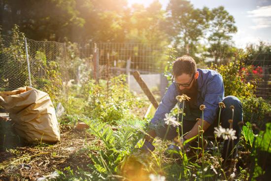 Junger Mann kniet in einem Pflanzenbeet und arbeitet mit den Haenden in der Erde