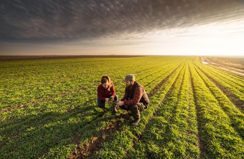 Ein Mann und eine Frau auf einem gruenen Feld untersuchen die angebauten Pflanze